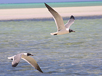 seabirdsmiddlecaicos